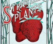Free vintage strawberry graphics from antique gardening catalog