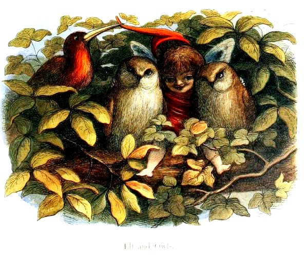 A vintage color illustration of an elf with owls and birds.