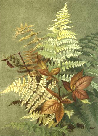 Fall Illustration of Autumn Leaves and Ferns - 19th Century Public Domain