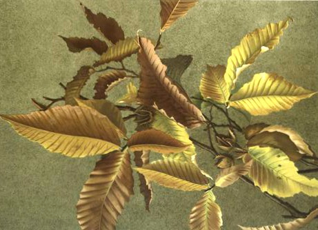 Fall illustrations of autumn leaves in the public domain