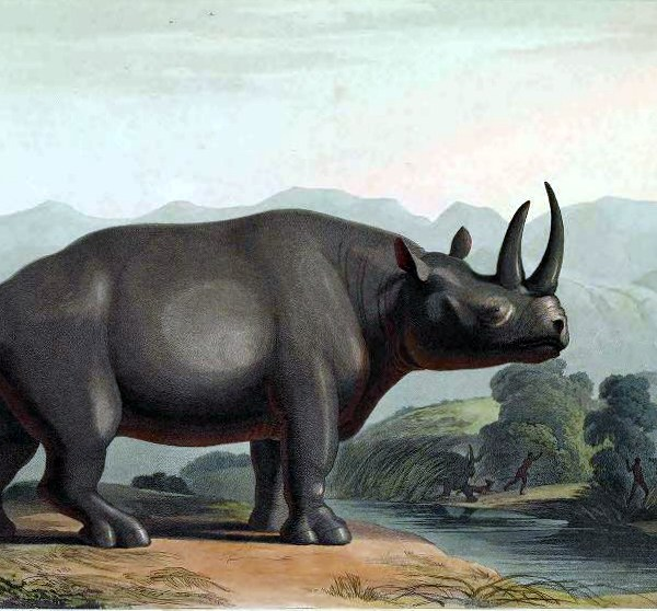 Rhinoceros illustration from 19th century - public domain