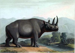 Rhinoceros illustration from 19th century - public domain