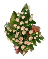 Free Valentine's Day pictures - 19th century antique illustration of baby's breath and leaves