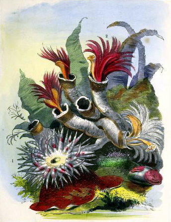 Vintage aquatic garden aquarium illustrations