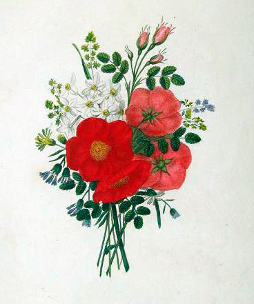 Copyright-free illustrations of red and white flowers