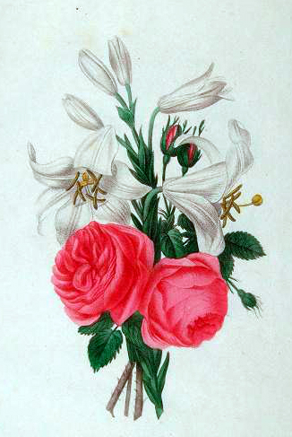 Copyright-free illustrations of French flowers