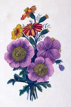 copyright free illustrations of purple flowers