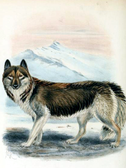 Canine images of 19th century domesticated dog