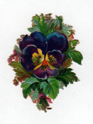 copyright-free illustrations of pansies