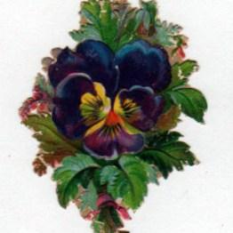 copyright-free illustrations of pansies