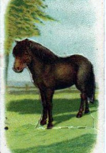 vintage nature illustrations of an early 20th century pony