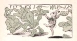 A free vintage illustration of a bunny dancing in a cabbage patch. From a public domain children's book.