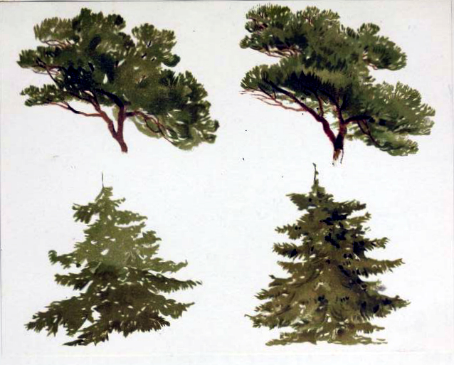 free antique fir tree illustration study