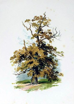 Free image of a golden tree illustration in autumn