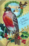 A free vintage Christmas illustration of a robin with Holly. Originally published in 1908!