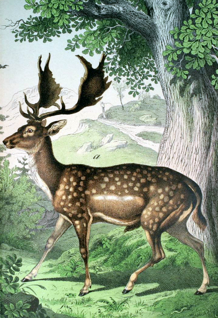 Free deer illustration from a 19th-century public domain children's book