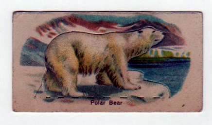 Free polar bear illustration from an early 20th-century trading card.