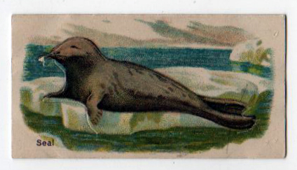 A free arctic seal illustration from a vintage cigarette trade card