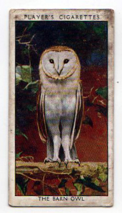 Free vintage illustration of a white barn owl, curated from a cigarette card