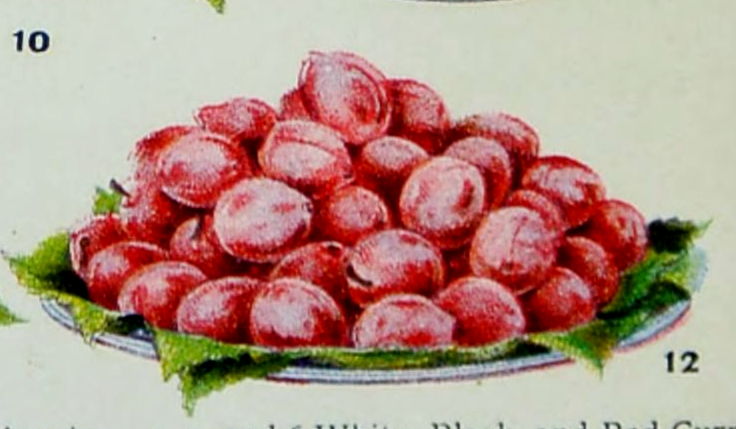 Public domain illustration of pink fruit