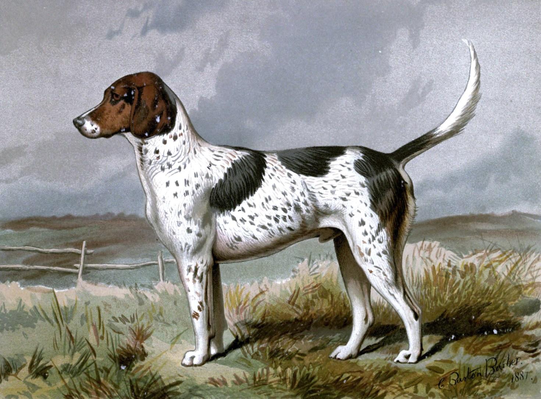 Free vintage foxhound dog illustration public domain.
