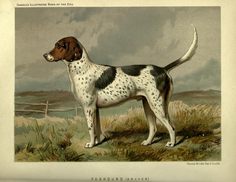 Free vintage foxhound dog illustration public domain.