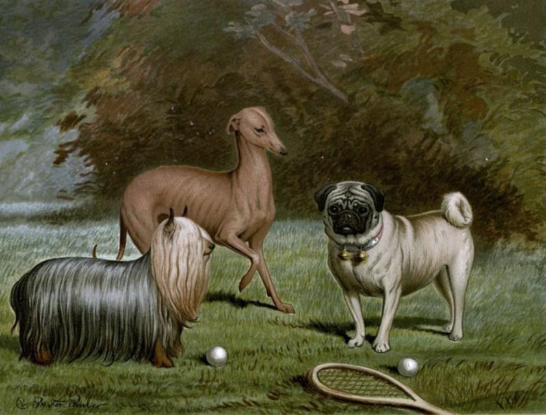 Free vintage little dogs illustration public domain.