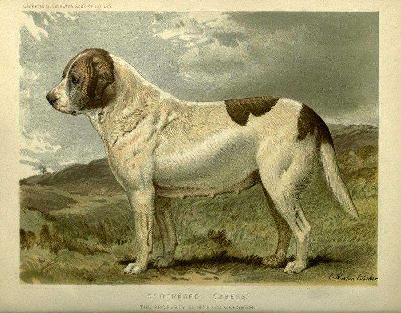 Free vintage st bernard abbess dog illustration public domain.