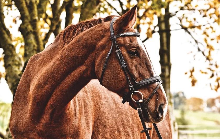 horse near tree