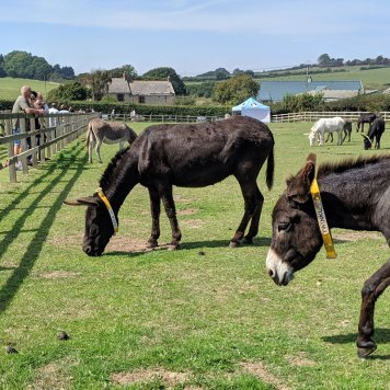 Isle of Wight Donkey Sanctuary