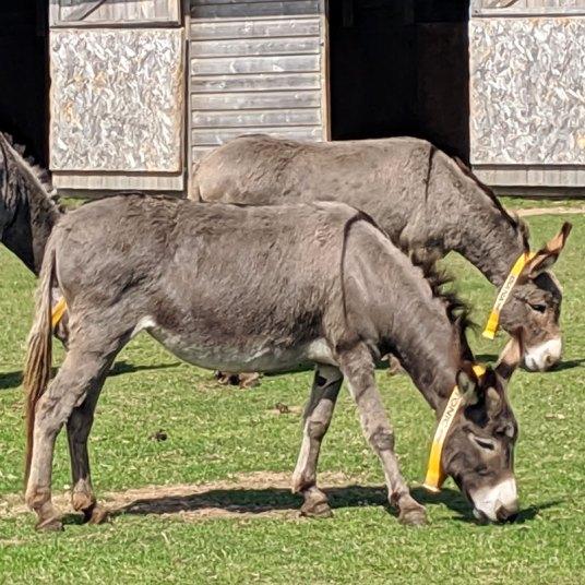 donkey-sanctuary5