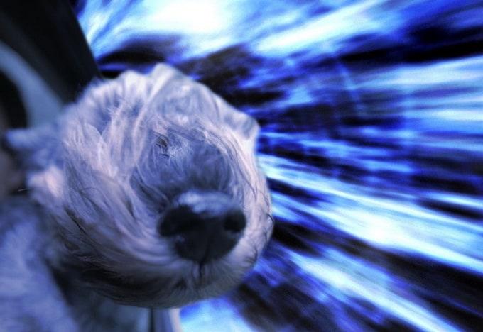 warpdogs2