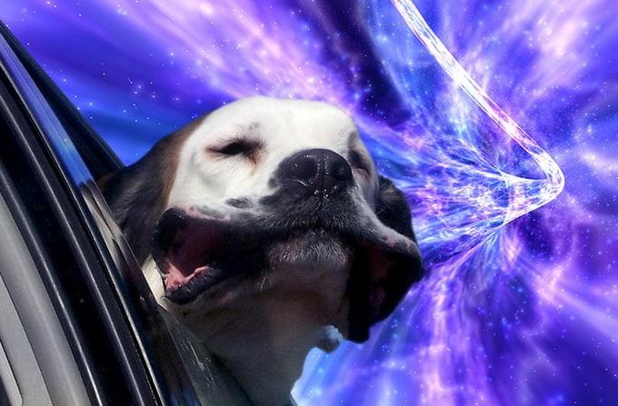 warpdogs4