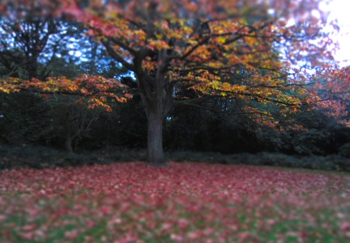 Secret Places for Autumn in London