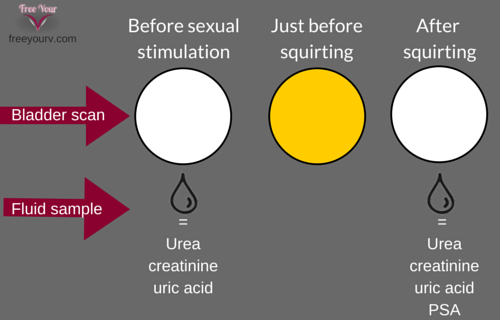 Squirting Is Pee