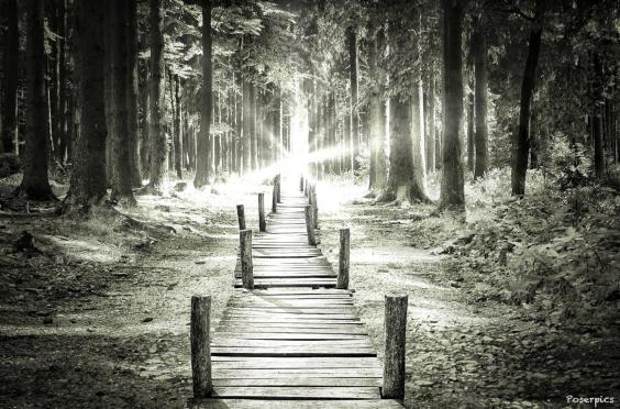 Bei einem Kurzurlaub zum Stausee in Geyer fotografierte Robert Poser diesen Weg. Dieses Mal hat er das Bild mit den Apps Filterstorm, MasterFX und LensLight bearbeitet. Foto: Robert Poser
