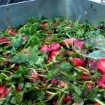 Rucola Erdbeeren Cocktailtomaten