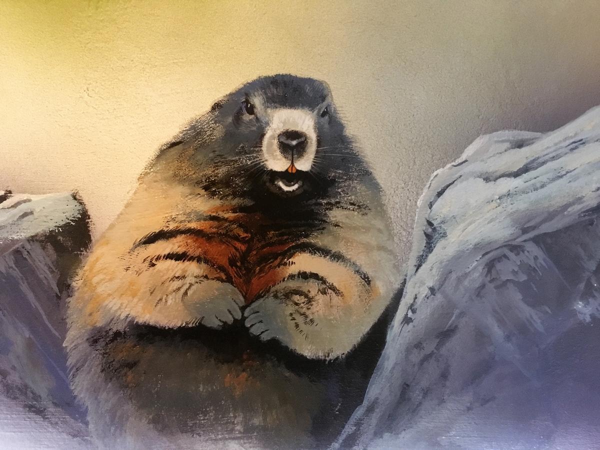 Ungewöhnlich Murmeltier Malvorlagen Galerie - Malvorlagen Von Tieren ...