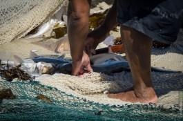 Fisch im Netz bei Fish Hoek