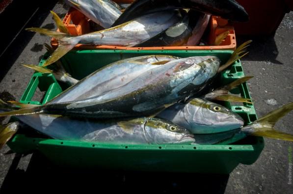 Frischer Fisch in Struisbaai