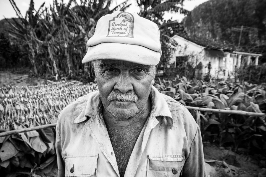 Mann im Tabakfeld