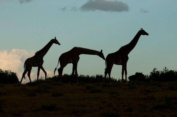 Tief in Afrika - Hartmut Fiebig