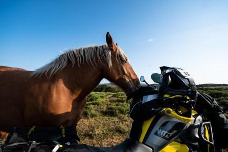 Pferde am Zelt