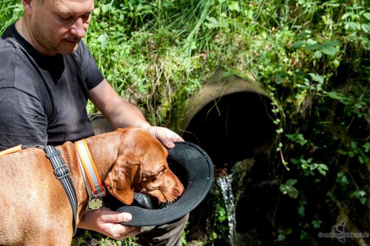 Hund trinkt aus dem Hut