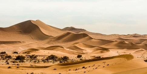 Rote Wüstendünen bei Sossusvlei in der Namib
