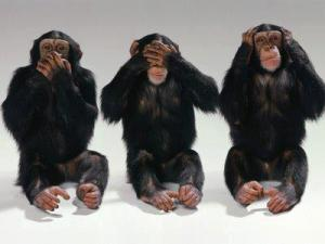 Chimpances