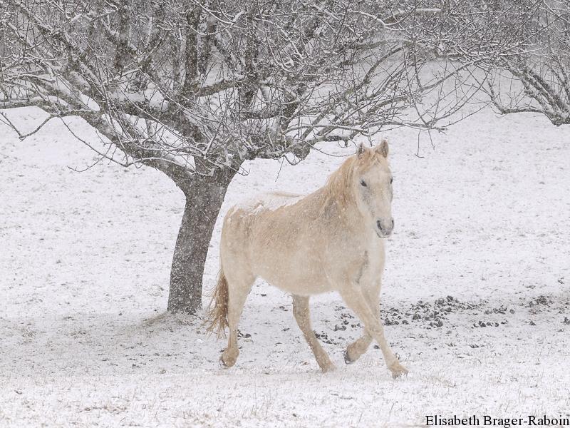 Cheval blanc de neige
