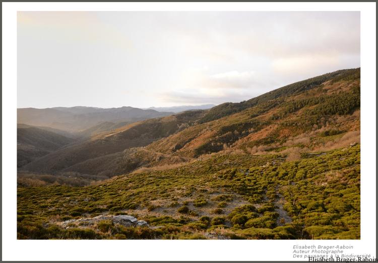 Montagne cévenoles au lever du soleil