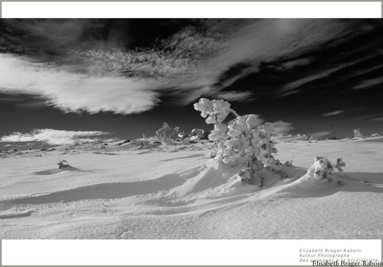 Entre ciel et neige