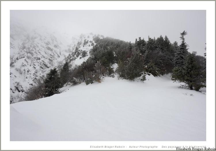 Les pentes abruptes du Mont Aigoual